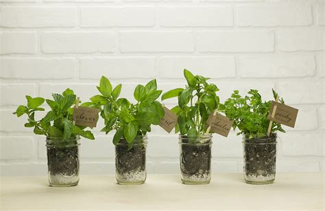 indoor herb garden  growing tips fixcountercom
