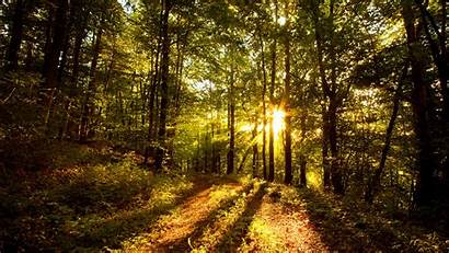 Sunlight Trees Through Coming Wallpapers Woods Nature