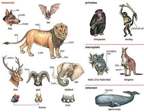 animals   names  parts learning english