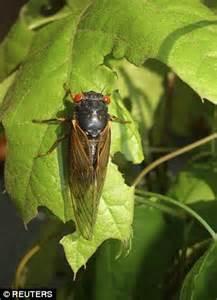 years underground  summer cicadas