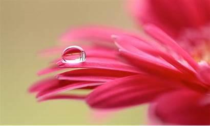 Flower 4k Desktop Petals Macro Purple Explored