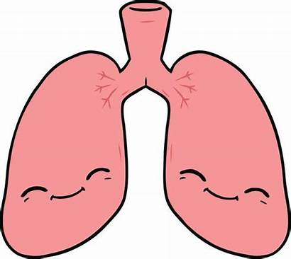 Lung Vector Animal Lungs Cartoon Clip Illustrations