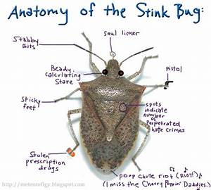 The Anatomy Of The Stink Bug   Stinkbugs  Pestcontrol