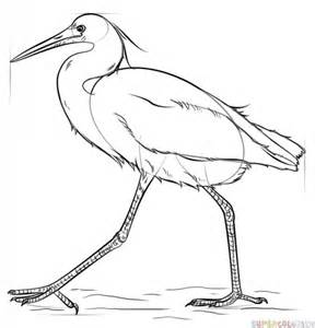 draw  snow egret step  step drawing tutorials