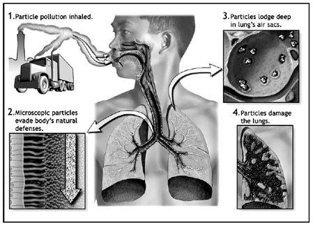 pollution pollutions effects