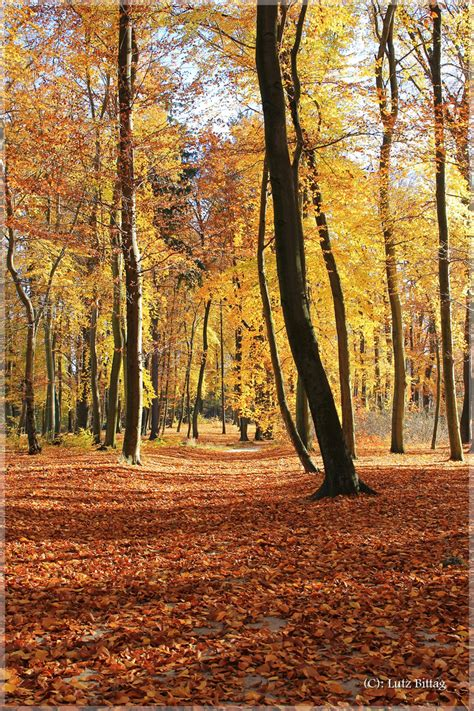 schöne bilder vom herbst die sch 246 ne seite vom herbst foto bild b 228 ume natur