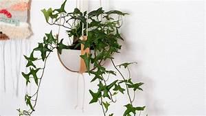 Suspension Plante Interieur : quelles plantes mettre dans une suspension m6 ~ Preciouscoupons.com Idées de Décoration
