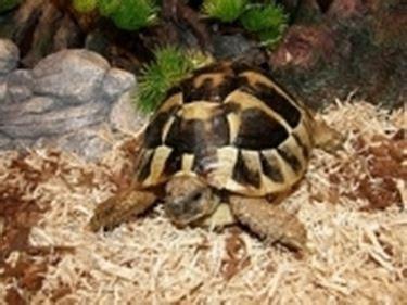 tartarughe alimentazione tartarughe specie tartarughe