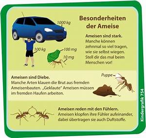 Ameisen Mit Flügel : wimmelnder haufen nanu ~ Buech-reservation.com Haus und Dekorationen