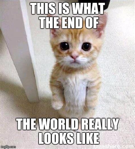 Cat In Suit Meme - olympic hazmat suit meme generator imgflip cat suit meme 28 images i should buy a hazmat suit
