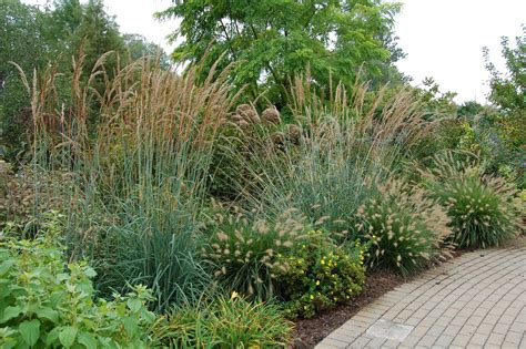 types of ornamental grasses for landscaping 10 favorite ornamental grasses for midwest landscaping