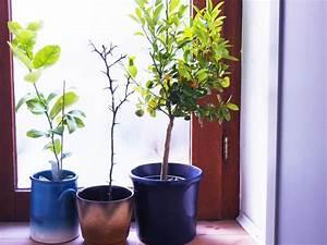 Pflanzen Die Nicht Viel Licht Brauchen : den balkon winterfest machen was ist zu tun ordnungsliebe ~ Markanthonyermac.com Haus und Dekorationen