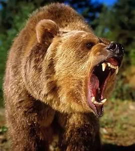 John  U201cgrizzly U201d Adams  U2013 Bear Hunter  U2013 Legends Of America