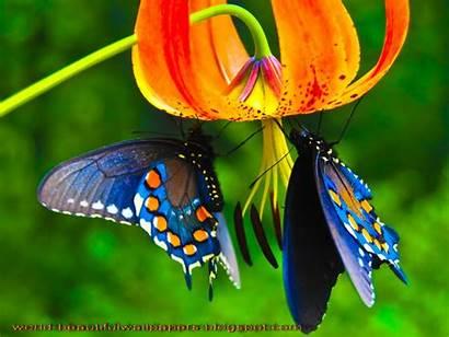 Butterflies Wallpapers Butterfly Flower Pixdaus
