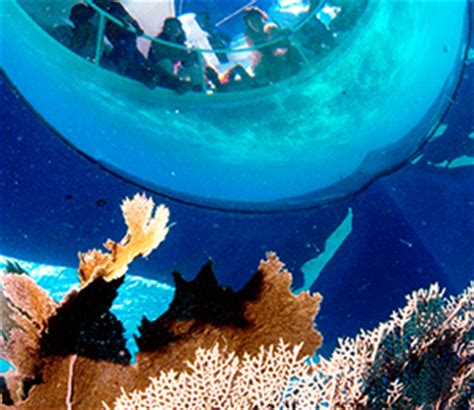 Glass Bottom Boat Bahamas by Things To Do In The Bahamas