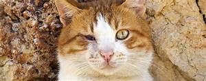 Katze Kotzt Viel : wenn die katze erblindet tipps zum umgang mit ihr katzen magazin ~ Frokenaadalensverden.com Haus und Dekorationen