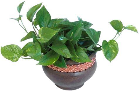 plante verte page 12