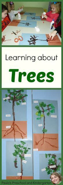 114 best tree theme weekly home preschool images nature 702 | 49e088f9d3b9aba82fdc388de59ab7bc kinder science preschool science