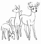 Deer Coloring Pages Whitetail Tailed Tail Printable Sheets Google Books Printables Popular Getcolorings Bestappsforkids Adult Al Coloringhome sketch template