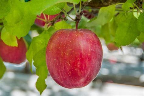 Your Fall 411: Apple Picking 101 | HGTV