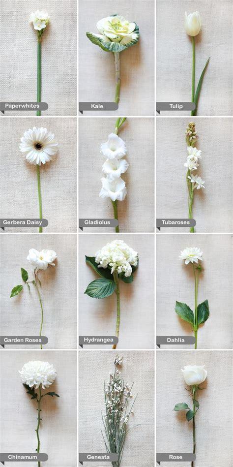 white flowers   flowers pinterest winter