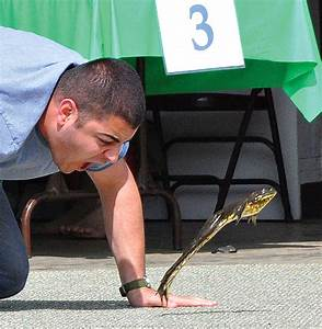 Frog Jumping Contest Calaveras County images