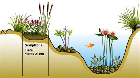 Teichpflanzen Fuer Verschiedene Wasserzonen by Sumpfzone Anlegen Im Gartenteich