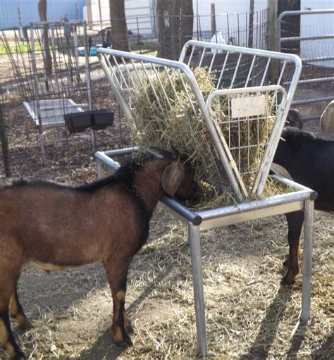 hay feeder goat goats feeders homemade shelters animal sheep noah goddard sue rugged ranch oconnorhomesinc