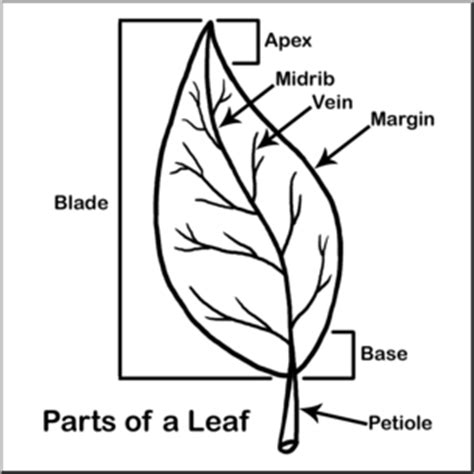 l words and pictures printable cards leaf legs clip leaf parts b w labeled abcteach