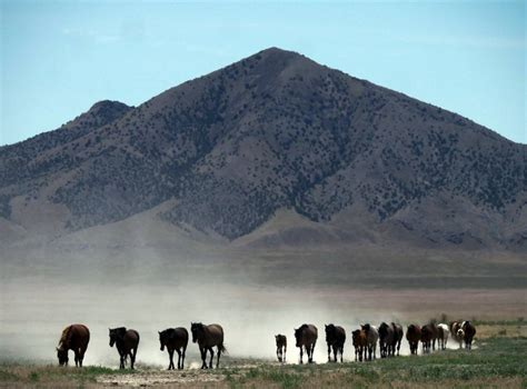 drought horses wild west american desert water face dangerous animal every independent dried conditions supplies heat severe threatens thirst dying