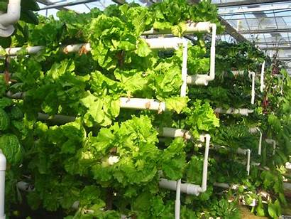 Hydroponic Vertical Farming Greenhouse Systems Growing Plant
