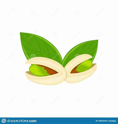 Pistachio Nut Leaves Isolated