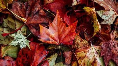 Leaves Autumn Fallen Dry Close Nature 4k