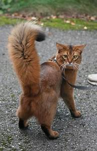 17 bästa bilder om I love cats the best! på Pinterest ...
