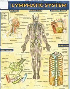 Псориаз это аллергическое заболевание
