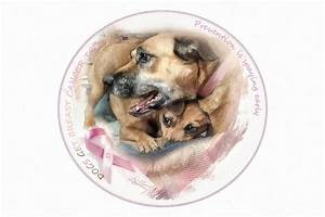 breast cancer awareness in dogs adelita rog