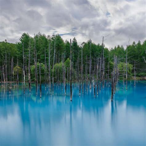Flooded Forest 4k Ultra Hd Mobile Wallpaper