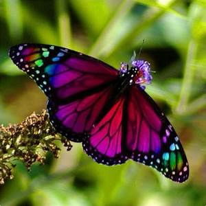 Colourful pictures of butterflies - Real butterflies ...