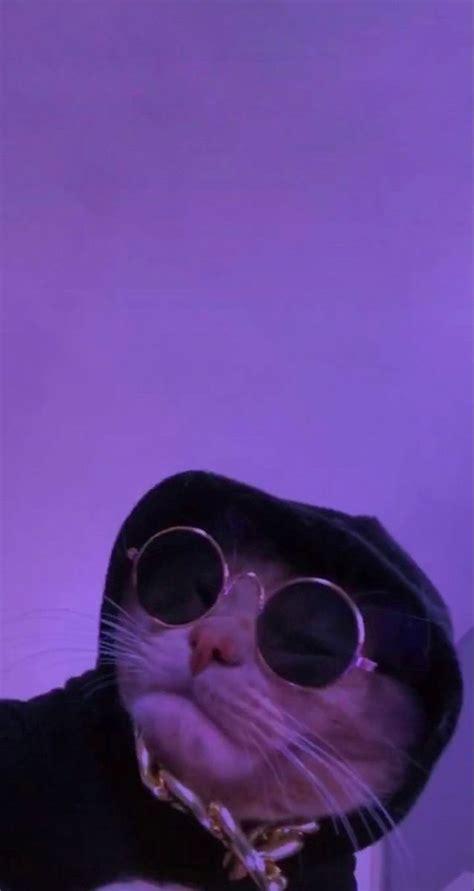 pinhilaryheid   cute cat wallpaper cat aesthetic