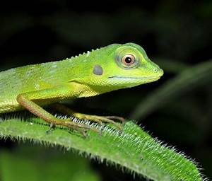 SAVE MACRITCHIE FOREST: 5. REFUGE FOR REPTILES – Bird ...