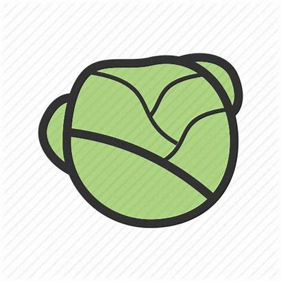 Healthy Lettuce Salad Leaf Icon Clipart Fresh