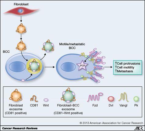 Tumorstroma Interaction Revealing Fibroblast Secreted