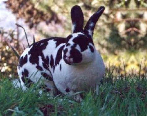 alimentazione conigli conigli razze e alimentazione