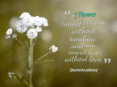 flower quotes  slogans  beautiful images