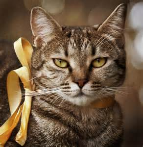 cat ribbon portrait of tabby cat with yellow ribbon photograph by by