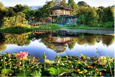 Lotus Garden Hours by Blue Lotus Water Garden Price Cafe Melbourne