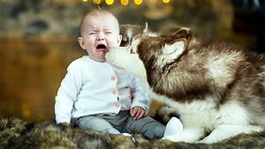 Crying Cute Baby and Dog HD Wallpaper Wallpapers - New HD ...