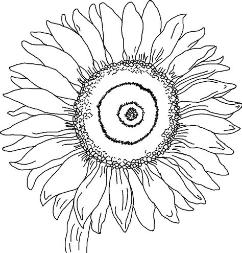 Realistic Sunflower Coloring Pages Coloring Page