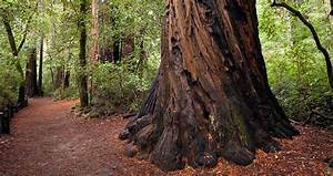 Big Basin Redwoods State Park | Save the Redwoods League