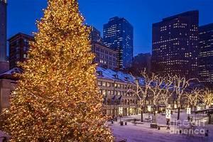 Best 28+ - Quincy Market Christmas Tree Lighting ...